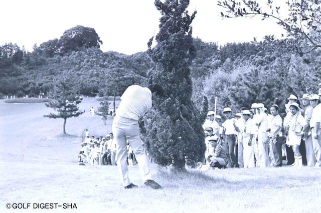 画像2: 木の根本に止まったピンチから…