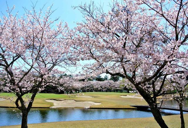 画像: 桜の美しいコースとしても知られる鶴舞CC(写真はイースト4番)