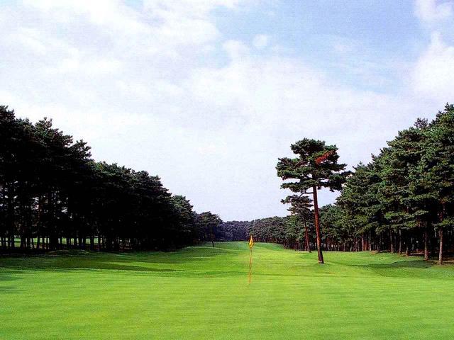 画像: 8番ホール/407㍎/パー4(加治川)やや距離のあるホール。グリーン左手前の松の木はスタイミーになる