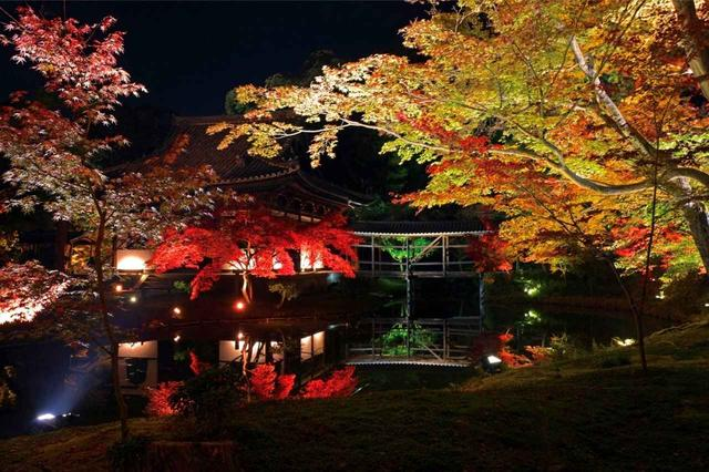 画像: 秋夜の高台寺