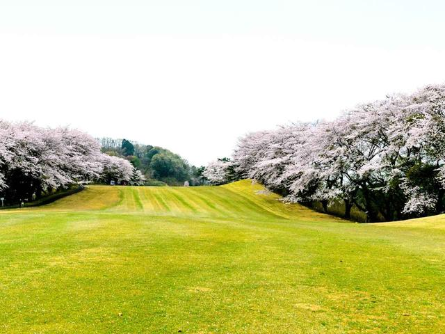 画像: 栃木CC 西C6番(556Y・P5)桜が名物のひとつ