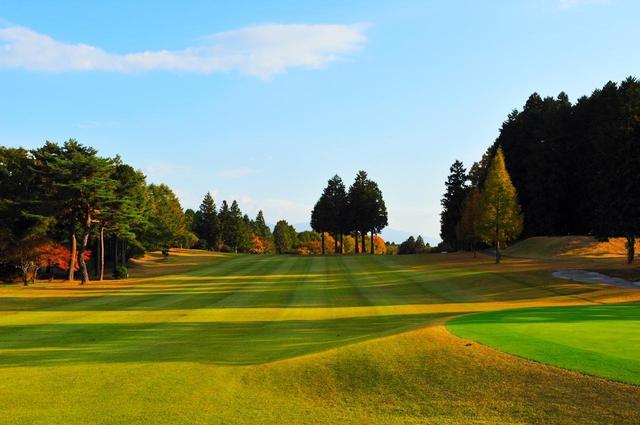 画像: 箱根コース 6番ホール(193Y・P3)グリーンサイドからティー方向。フェアウェイの木がプレーヤーを悩ませる