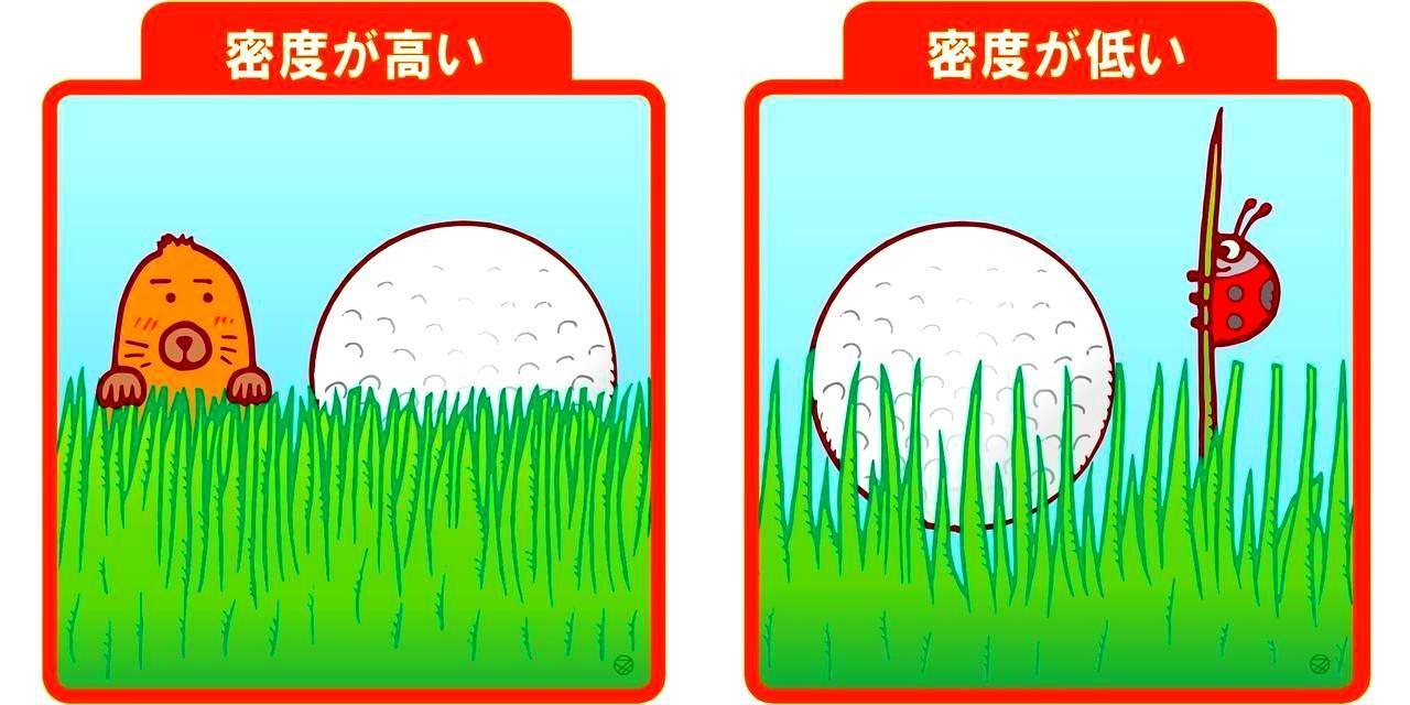 画像1: 【その一】芝の密度