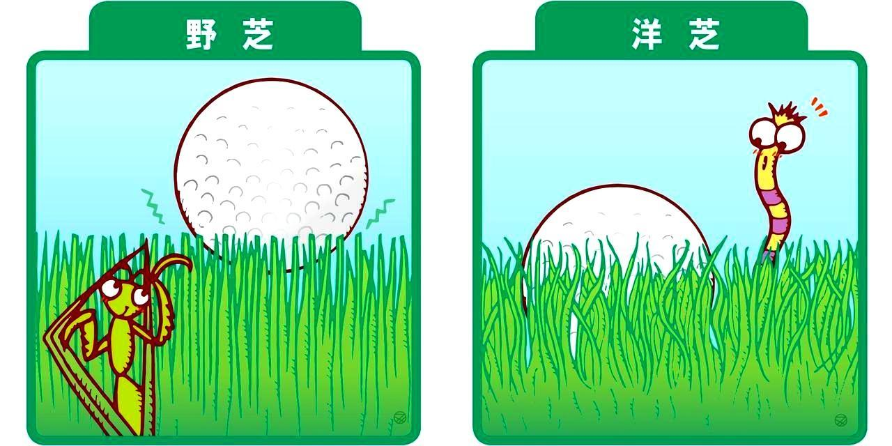 画像1: 【その三】芝の種類