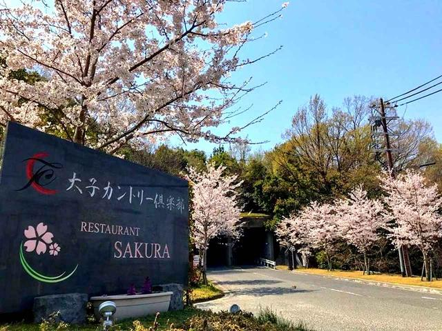画像: 桜の季節には公道からのアプローチが桜並木に(Ph/TaishiCC FB)