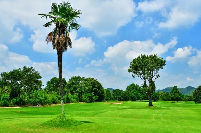 画像: 7番(338Y・P4)見慣れない木々がハザードの役目。ホール左は吉井川でOB