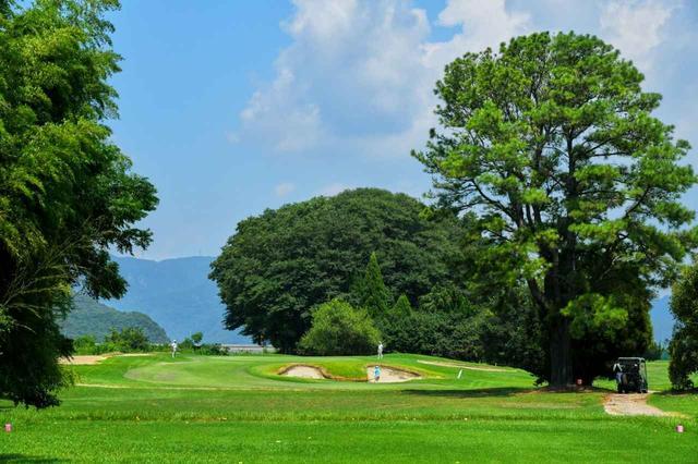 画像: 15番(161Y・P3)ティーングエリアから見たグリーンとお宮の森