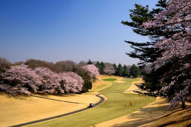 画像: 西6番(416Y・P4)桜が美しいコースとしても有名