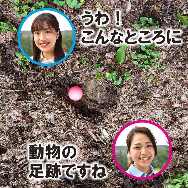 画像2: 【新ルール】動物の足跡は動物の穴? 救済できる、それともできない?