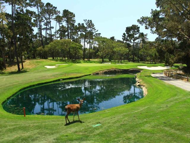 画像1: スパイグラスヒル・ゴルフコース(Spyglass Hill Golf Course)