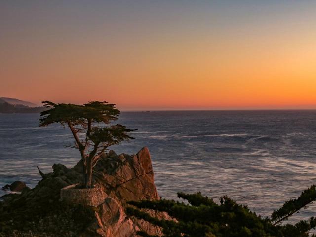 """画像: ペブルビーチGLのマークにもなっている、モントレー半島のシンボル""""The Lone Cypress"""""""