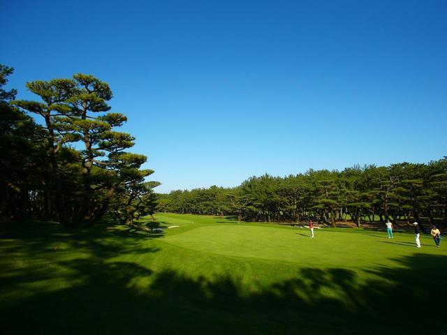 画像4: 海沿いの松林に広がる「世界基準」27ホール。ダンロップフェニックスを開催する宮崎ナンバーワンの名コースです