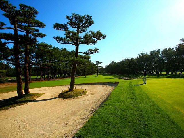 画像3: 海沿いの松林に広がる「世界基準」27ホール。ダンロップフェニックスを開催する宮崎ナンバーワンの名コースです