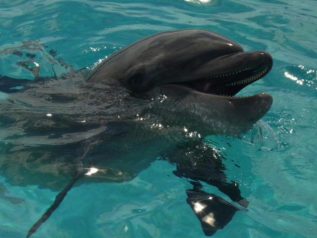 画像: イルカラグーンでは餌やり体験もできる
