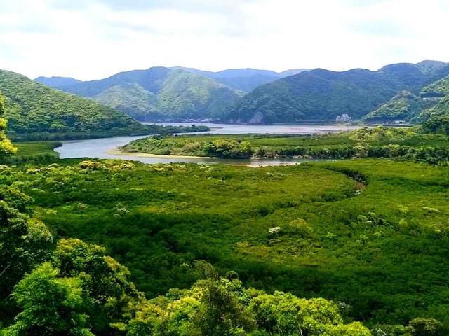 画像: 奄美大島のマングローブ