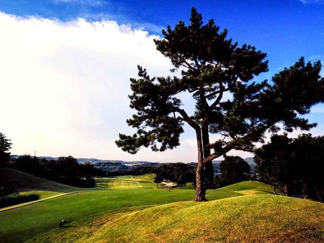画像: 東広野ゴルフクラブ 6番(440Y・P4)打ち下ろしで、風を受けやすいホール、グリーンには大きなアンジュレーション