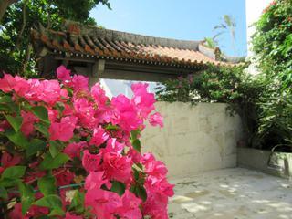 敷地内のいたるところでハイビスカスなど沖縄ならではの花がお出迎え