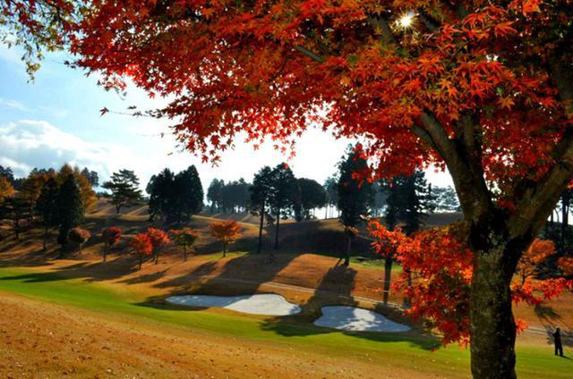 画像: 紅葉ゴルフも楽しめる36ホール
