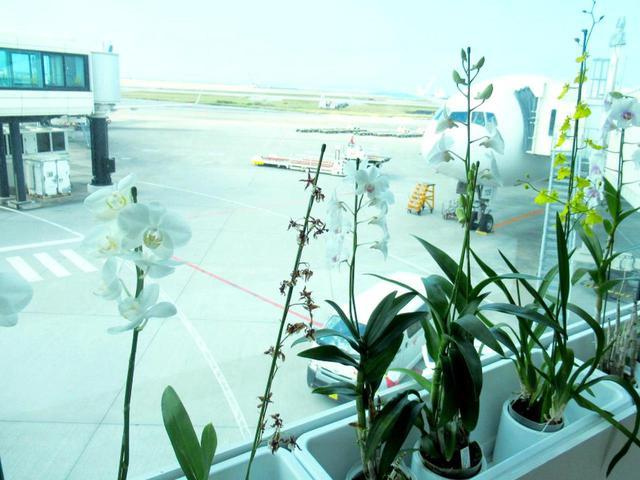 画像: 飛行機からボーディングブリッジへ。ほのかな南国の花の香りがお出迎え
