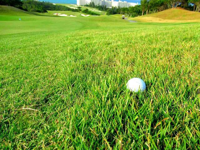 画像: ラフは基本高麗芝だが、バミューダ系の芝も混じり合う