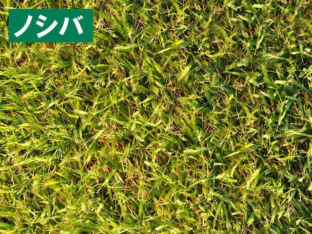 画像: 【ゴルフの芝を研究②】亜熱帯化の日本に最新バミューダがやってきた↓