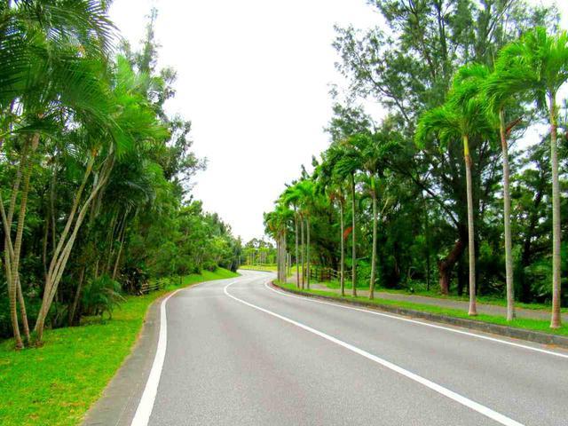 画像: コースまでの道のりは南国感満載