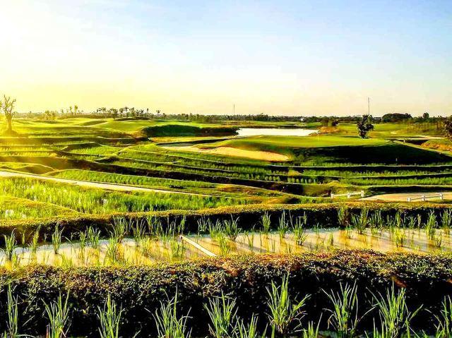画像2: 稲作の水田をペナルティエリアに取り入れる