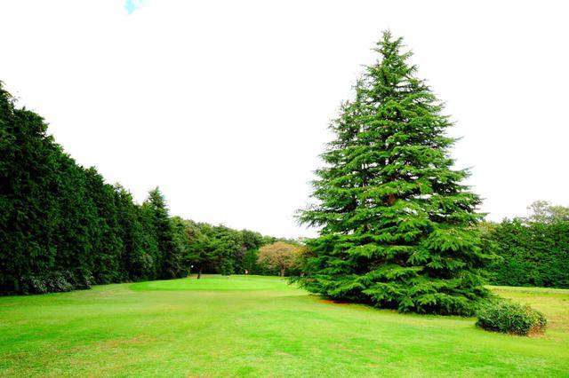 画像: 4番(80Y)フェアウェイ右サイドの大木に気をつけて