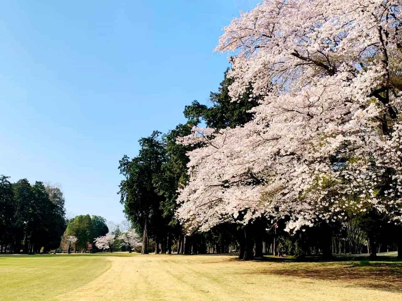 画像: 旧久保田邸の庭園にあった桜を活かしたアウトコース