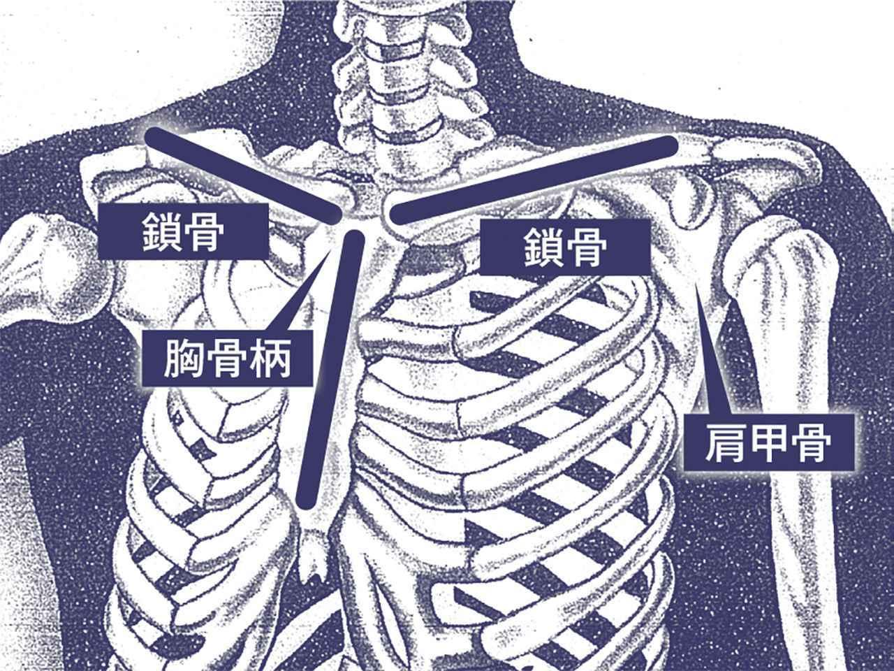 """画像: 「回転する""""軸"""" を意識するのは難しい。『胸骨柄(きょうこつへい)』を中心に回るイメージだと楽。『胸骨柄』に『鎖骨』がつき、その『鎖骨』は背中側まで回り込んで『肩甲骨』と結合している。この構造を理解しましょう」"""