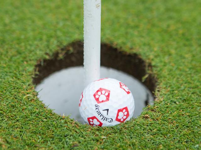 画像9: 【ゴルフルール理解度クイズ】〇か✖か何問正解できる? 新ルールになってはや1年、80点以上で合格