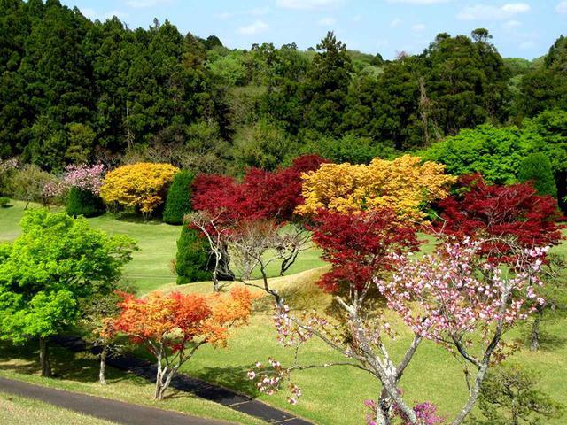 画像: 四季の彩りが楽しめる成田ハイツリー