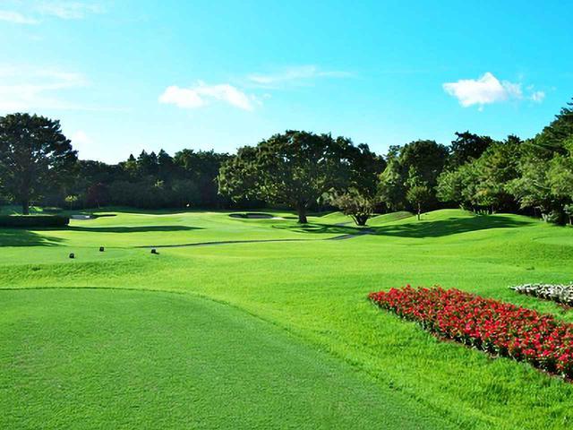 画像: アスレチックガーデンゴルフ倶楽部 16番パー3、204㍎と距離があるがグリーンは大きめ。2つの木の間を通すイメージ