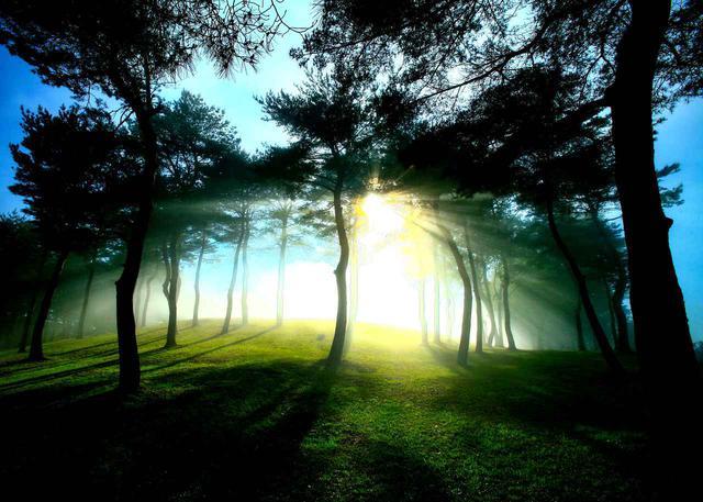 画像: ③早朝のゴルフ場