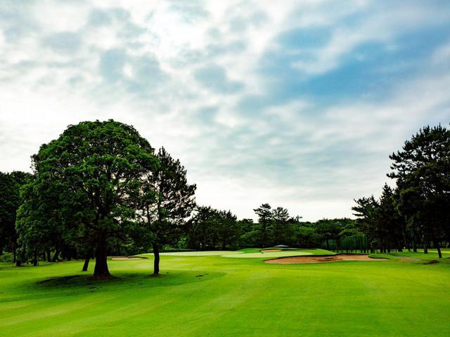 画像: 8番(362㍎・P4)フェアウェイに立つ3本の木を避けて攻略。手引きカートを引いてのんびりゴルフ