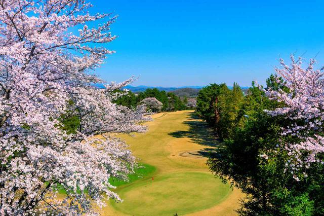 画像: 武蔵野ゴルフクラブ 9番ホール(367Y・P4)