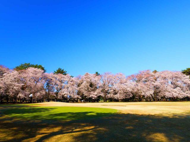 画像: 大宮ゴルフコース 14番ホール(610Y・P5)