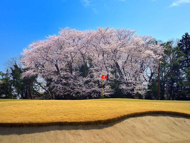 画像: 東松山カントリークラブ