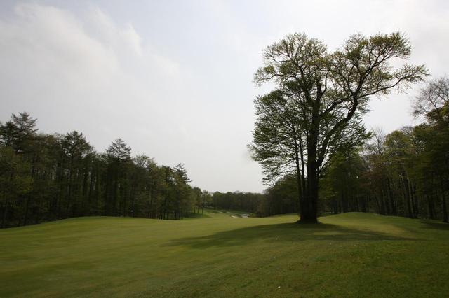 画像2: 桂ゴルフ倶楽部