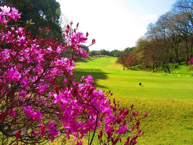 画像: コースのそこかしこに美しい花々の姿が