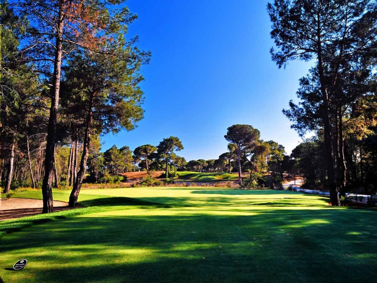 画像1: アンケートに答えて アディダスを着て、履いて、ゴルフへ行くぞ!
