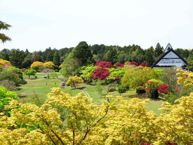 画像: 四季折々の姿を見せる。美しく手入れされた60種・8500本の庭園木