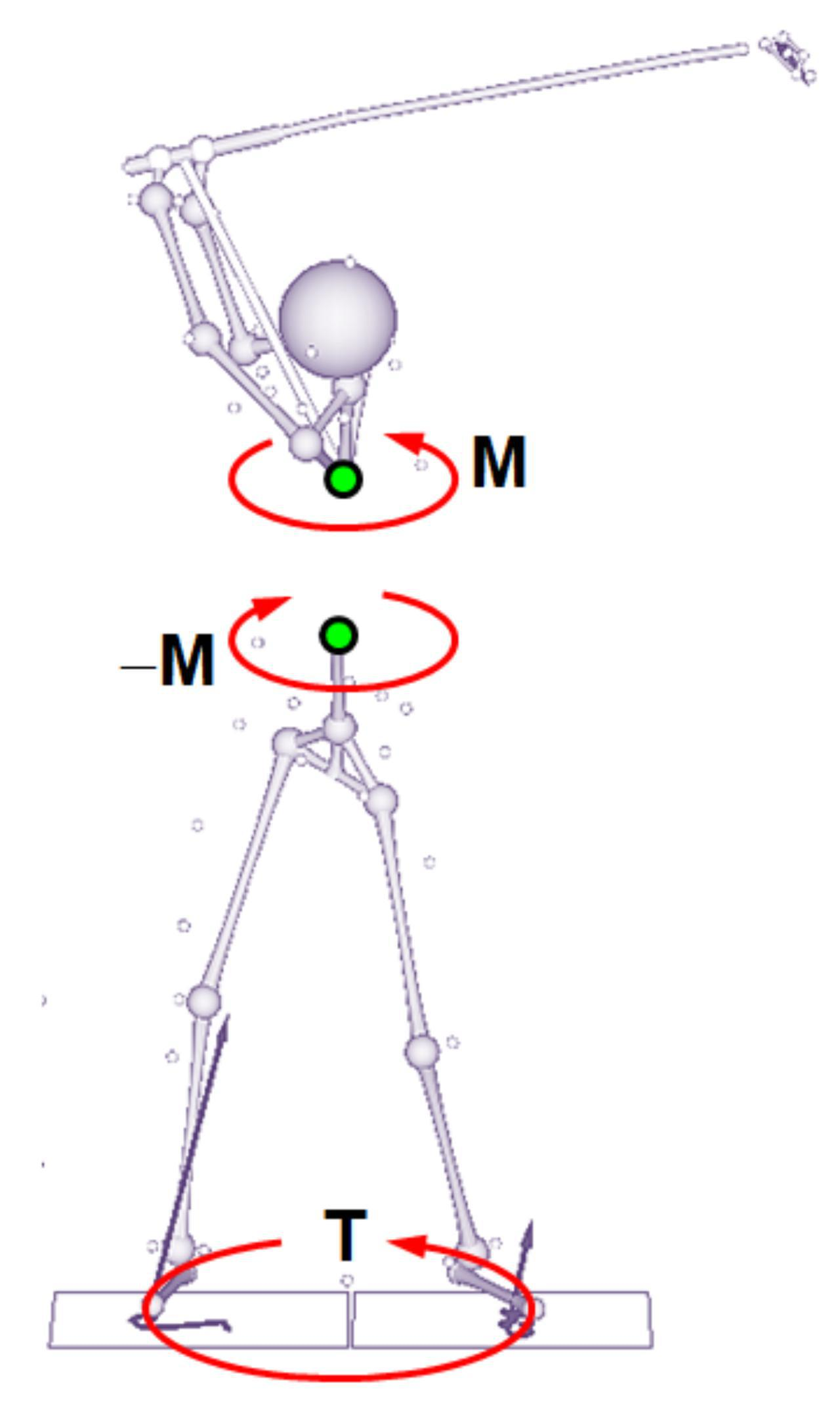 画像: 地面反力によって、切り返しの段階ですでに大きな半時計回りのトルク「T」が働いている。ダウンスウィングで胸を回転させようとするトルク「M」が生じると、作用・反作用の法則により腰には逆回転のトルク「マイナスM」が発生するが、この力は「T」よりも小さいので、腰が逆回転することはありえない。ただ、腰の回転速度は減速する