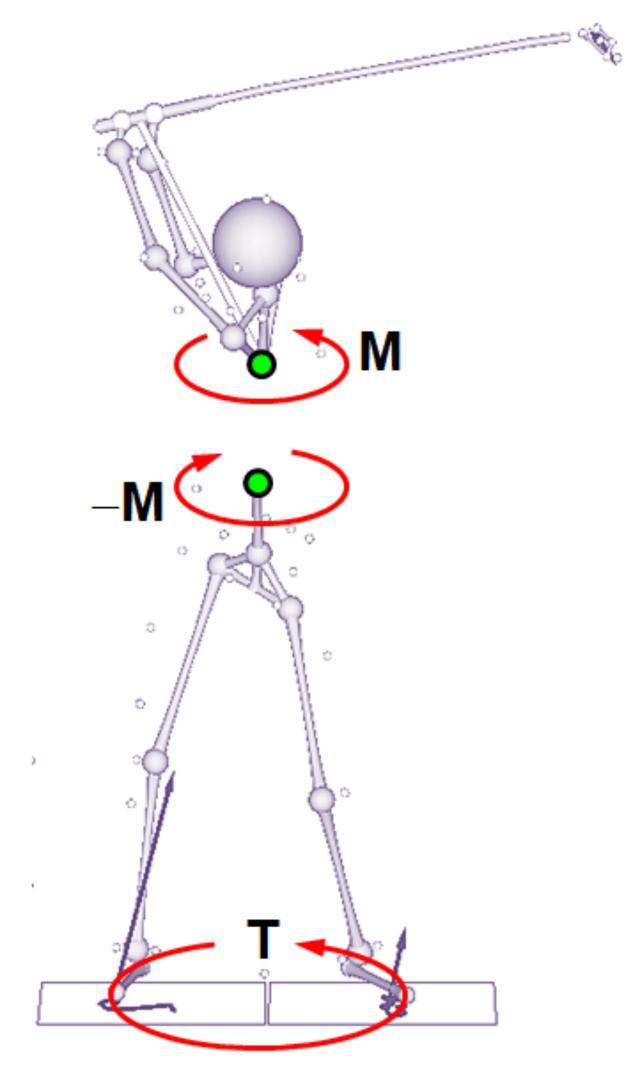 画像: ダウンスウィングの初期に、体幹部の筋肉によって、胸椎を半時計回りに回転させようとするトルクMが生じる。すると、体幹の筋肉によって胸椎とつながっている骨盤部分には、作用・反作用の法則により「同じ大きさの逆向きの力(-M)」が働く。これが「ツイスト」の正体