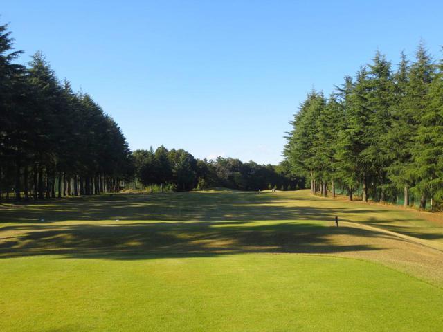 画像: フラットな林間コースで幅広いゴルファーにおすすめ