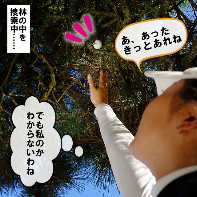 画像2: 【新ルール】木の上の球を枝を揺らして落とした。こういうときはどうする?