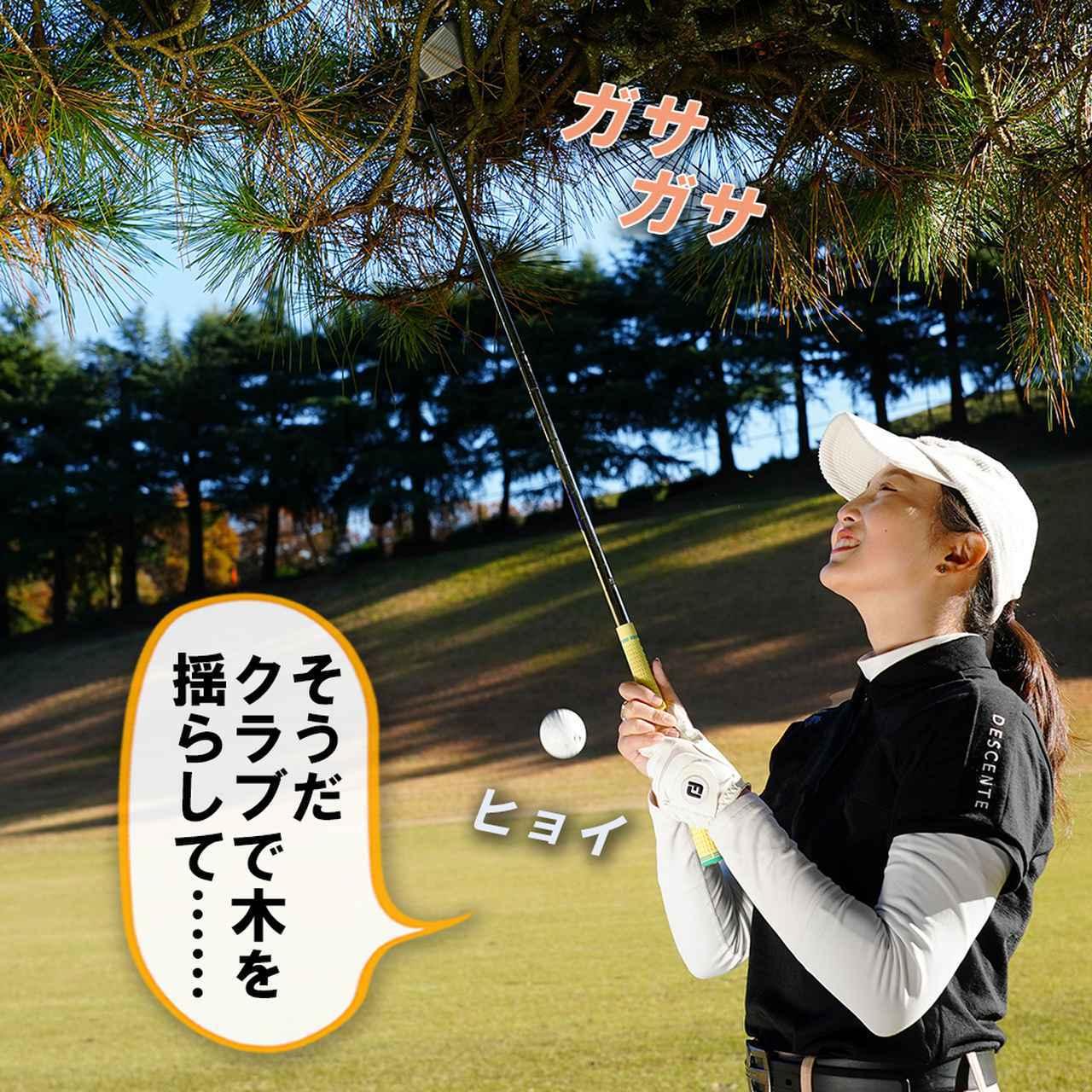 画像3: 【新ルール】木の上の球を枝を揺らして落とした。こういうときはどうする?