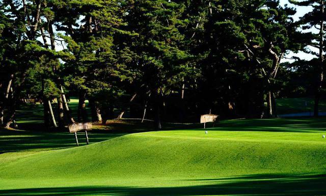 画像: 大洗ゴルフ倶楽部 NO.1 松林に囲まれたスタートホール
