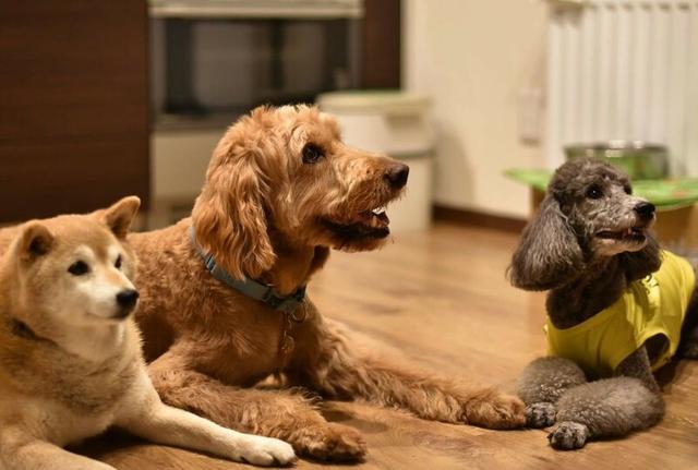 画像4: 【F-12188/北海道・ニセコ】大自然ニセコで愛犬と泊まる4日間2プレー!ワンちゃんと一緒にラウンドOK!(1プレーのみ)