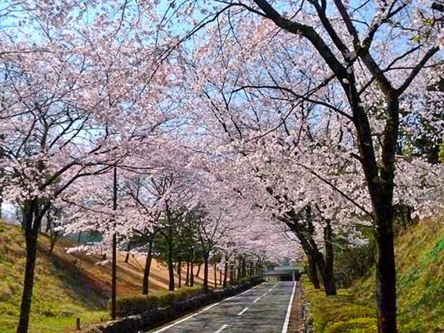 画像: 飯能くすの樹カントリー倶楽部(埼玉県)